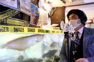 飼育する魚類やは虫類などを紹介する動画を配信している篠澤さん(京都市右京区太秦・花園キリスト教会の水族館)