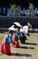 神楽女が御田舞を舞う中、早苗を手植えする奉仕者たち(京都市伏見区・伏見稲荷大社)