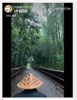 「竹林の小径」の景色を人力車から撮影して中継した映像