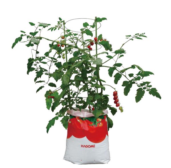 そのまま育てるトマトの土 15L