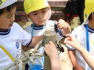 カブトムシに触れ、大喜びの園児たち(大津市山上町・比叡山ドライブウェイ「かぶと虫の家」)」