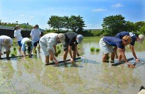 キャンパス内の実習圃場で田植えを体験する学生たち(京都府亀岡市曽我部町・京都先端科学大)