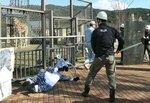 地震で脱走したとの想定で、シマウマ役の職員を刺股を使って捕獲する職員(京都市左京区・市動物園)