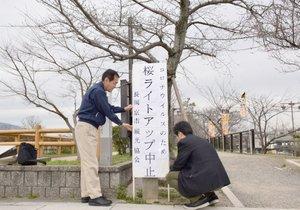 つぼみが膨らんだサクラの木の下に立てられた看板(長岡京市天神2丁目・八条ケ池東堤)