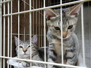 京都動物愛護センターに保護され、飼い主の引き取り手を待つ猫たち(京都市南区)