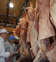 出品された亀岡牛の枝肉をじっくり調べる審査員(亀岡市三宅町・市食肉センター)