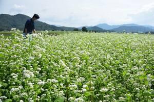 山裾に広がるソバの花(滋賀県多賀町敏満寺)
