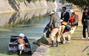二条城の堀からイノシシを引き上げる管理事務所の職員ら(27日午後2時20分、京都市中京区)