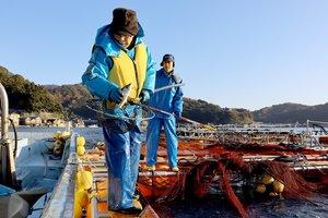 伊根湾に浮かぶいけすから、養殖に協力する白須さん(右)と舟屋サバを取り出す八木さん=伊根町