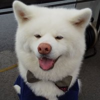 こにゃん市の第10代市長に決まった元保護犬の白水=湖南市観光協会提供