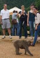 母親のおなかにしがみつく赤ちゃんザルを見つめる外国人観光客