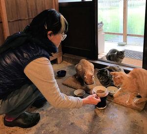 新道さんらの世話で「地域猫」として育てられている猫たち(新道さん提供、南丹市美山町北)