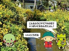 西京区役所が作った動画の一場面。「たけにょん」(右端)と「なでがめちゃん」(左端)が、「明智かめまる」と一緒に明智川を紹介する