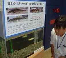 琵琶湖博物館で展示されている新種のナガレカマツカ(草津市下物町)
