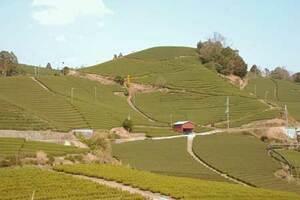 日本遺産「日本茶800年の歴史散歩」構成文化財である和束町の茶畑。茶農家の日々の仕事によって美しい景観が保たれている(京都府和束町石寺)