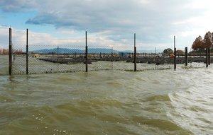 赤野井湾に設置されている真珠の養殖棚。プレジャーボートで立つ波で養殖にも影響が出ている(2019年12月、守山市沖)