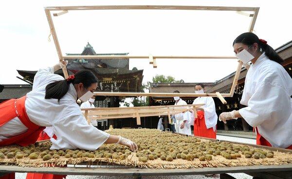 むしろに広げられた梅に飛沫がかからないようビニール製シールドで覆う巫女たち(3日午前10時27分、京都市上京区・北野天満宮)
