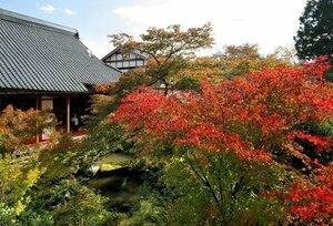 秋晴れの青空の下、色づき始めたモミジ(29日午後0時47分、京都市左京区岩倉・実相院)