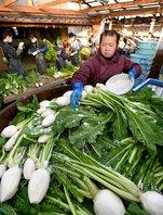 大だるに塩を振って漬け込まれるすぐき菜(29日午前8時10分、京都市北区)
