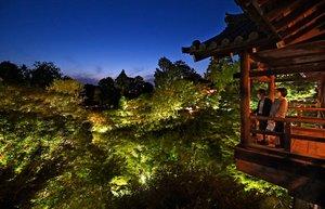 夕暮れが深まる中、ライトアップで青もみじが輝く東福寺の境内(京都市東山区)