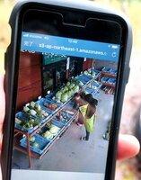 「美山暮らしアプリ」のライブカメラに映し出される野菜売り場(南丹市美山町・大野屋)