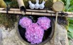 柳谷観音楊谷寺の花手水=写真はいずれも同寺提供
