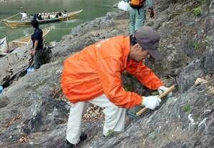 保津川下りの船から景色を楽しんでもらおうと、岩場にイワツツジの苗を植える参加者(京都府亀岡市)