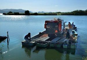 4隻の田舟を連結し、対岸の権座へとコンバインを運ぶ農家たち(10月9日、近江八幡市白王町)