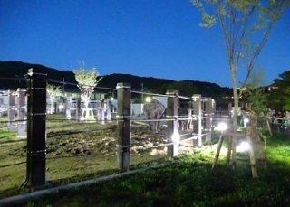 幻想的な雰囲気の夜の動物園=京都市動物園提供